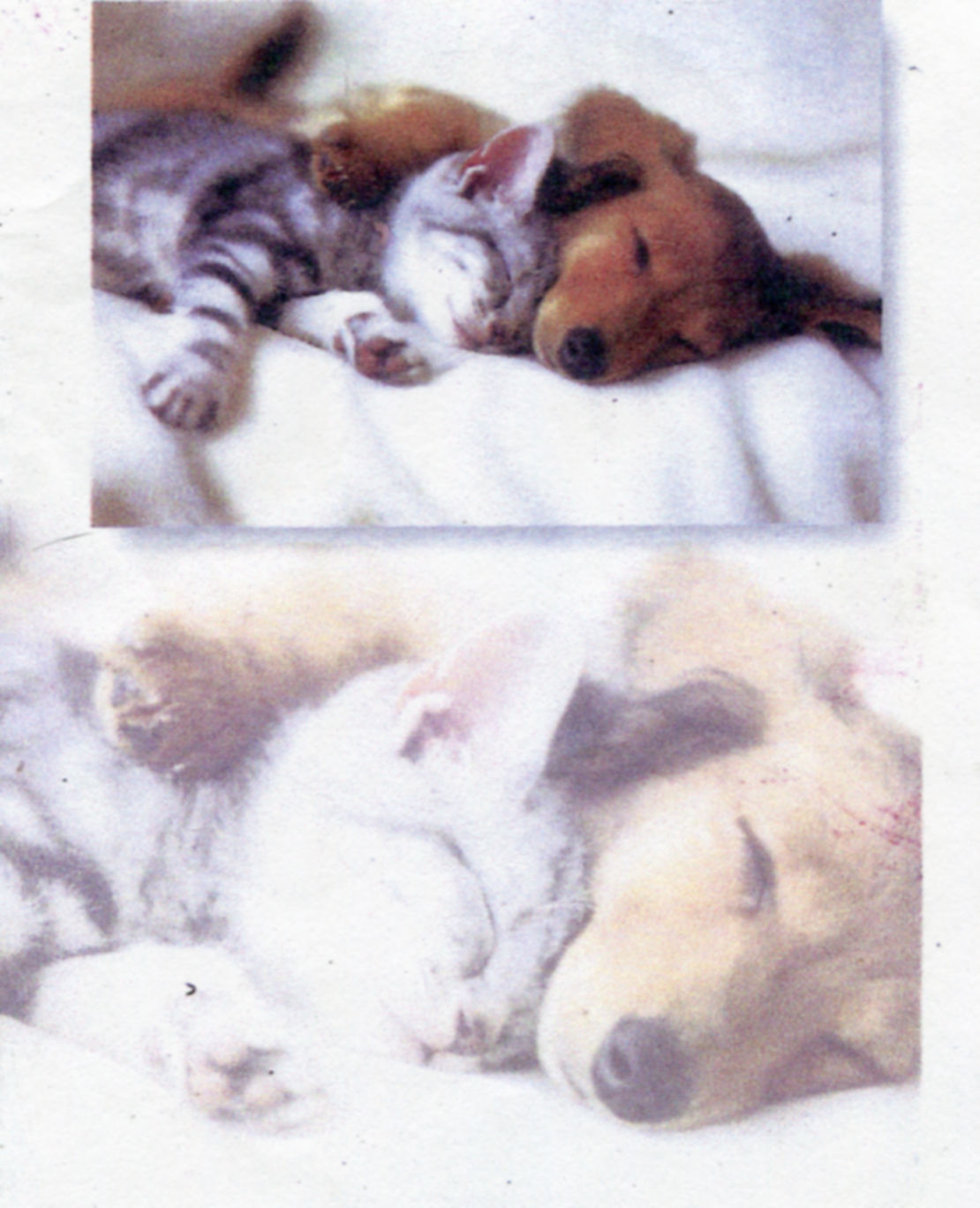 True - There IS a great affinity between Cats & Dachsies\\n\\n05/04/2013 12:45