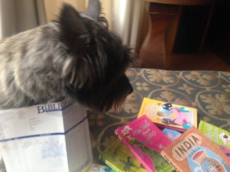 Pippin_in_Washington_reading_Bib_books\\n\\n20/06/2019 15:35