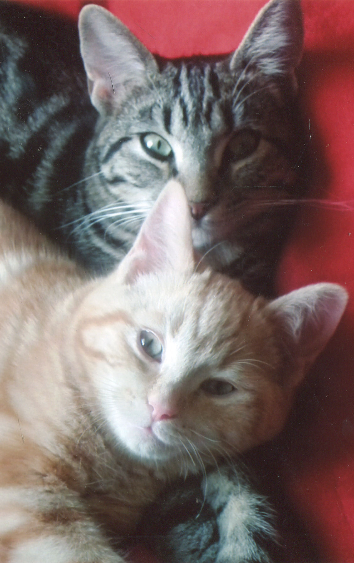 Willow & Rown Half brother & sister, great pets and great fun and company\\n\\n22/09/2014 06:04